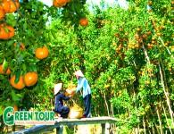 Tour Đà Nẵng – Sài Gòn – Miền Tây 4 ngày 3 đêm