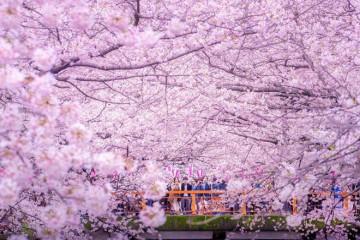Tokyo Núi Phú Sĩ trải nghiệm tắm Osen – Yokohama